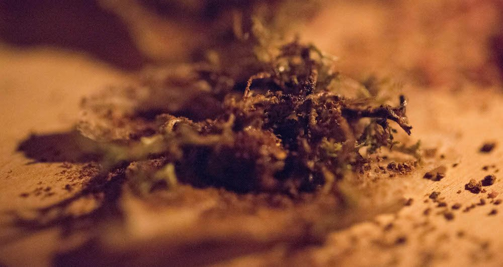 Dehydrated Cauliflower & Moss at Dill in Reykjavik Iceland