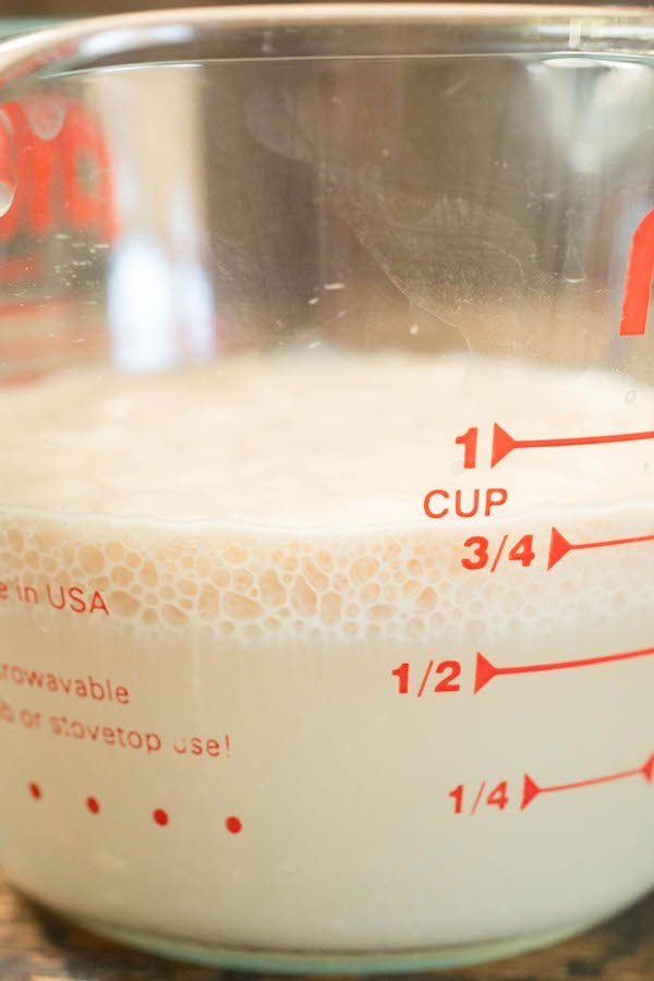 Close up of yeast that has bloomed in a glass pyrex measuring cup