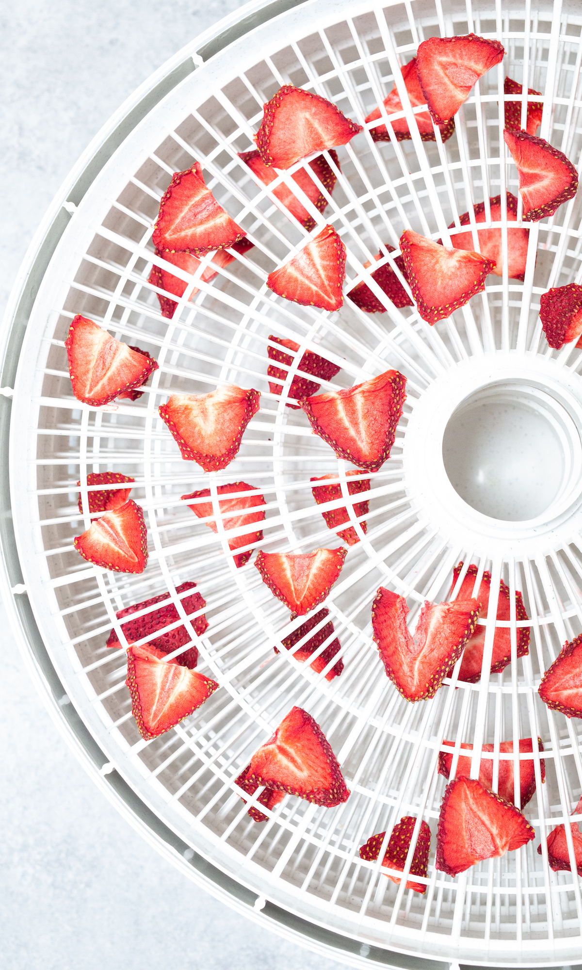 Overhead view of a dehydrator tray filled with sliced and dehydrated strawberries